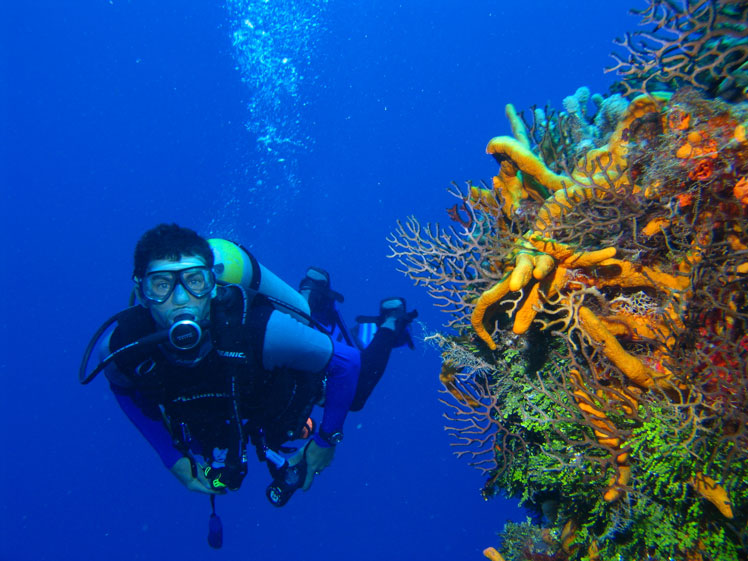 3 Nights 4 Days Discover Zen Harmony Diving Retreat in Bali (For Uncertified Diver)